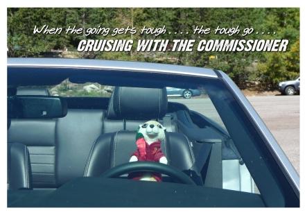 Cruising #203